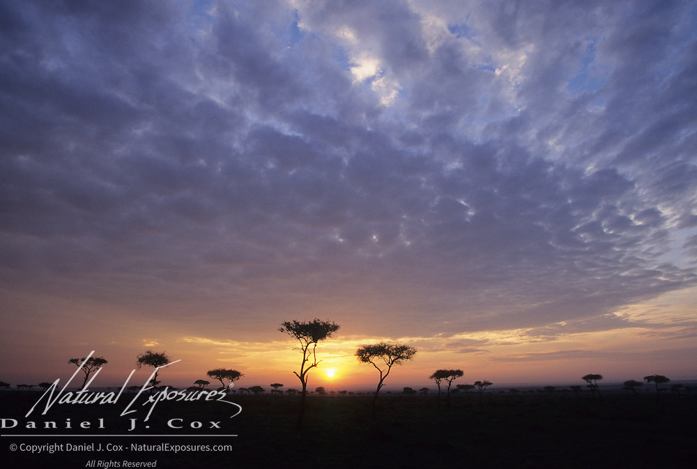 Sunset over Masai Mara National Reserve in Kenya, Africa.