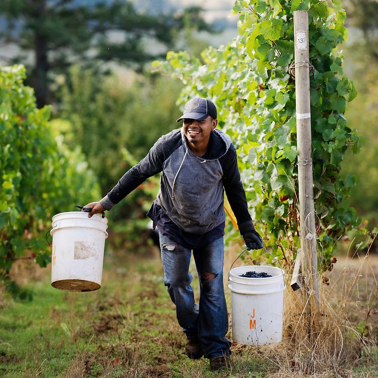 Carlton Cellars 2015 Pinot Noir Harvest