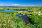 Coastal marsh in the St. Lawrence River<br />L'Isle-Verte<br />Quebec<br />Canada