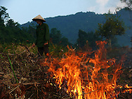 Cao Bang area in the north of Vietnam. Man burning crop residues