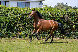 Principessa van de Drie Leien<br /> Stal van de Drie Leien - Pittem 2020<br /> © Hippo Foto - Dirk Caremans<br /> 23/07/2020