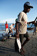 A fishermen involved in the catch carries a fin from a pilot whale. The Indonesian village of Lamalera has hunted whales, sharks and dolphins for the last 500 years. Their method is to leap from a small wooden boat with a long harpoon made of bamboo and spear the animal. Once brought to shore the animal is divided in to parts and distributed to the community, partly for consumption and partly for exchanging with other inland communities for corn and rice..On the 21 May 2009 at the World Oceans Conference, the Indonesian government officially declared 3.5 million hectares of critical marine habitat in the Savu Sea for conservation. Though government representatives have assured that traditional whaling -- which has been supporting the surrounding communities' means of living -- will not be banned in the area immediately outside the zone, concerns still remain. Lamalera is one of the last remaining Indonesian whaling communities and is categorized by the International Whaling Commission as aboriginal whaling..