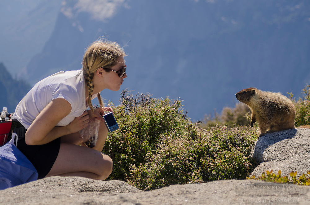Marmot (Marmota flaviventris) and hiker on top of Half Dome, Yosemite National Park, California