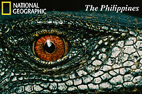 Eye of a Panay monitor lizard, Varanus mabitang.  A new species discovered in Panay Island, Philippines in 2001.<br />