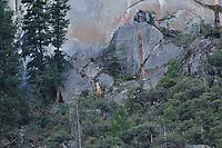 Rock slide site. Rock Slide at Curry Village in Yosemite Valley on 07-October-2008.