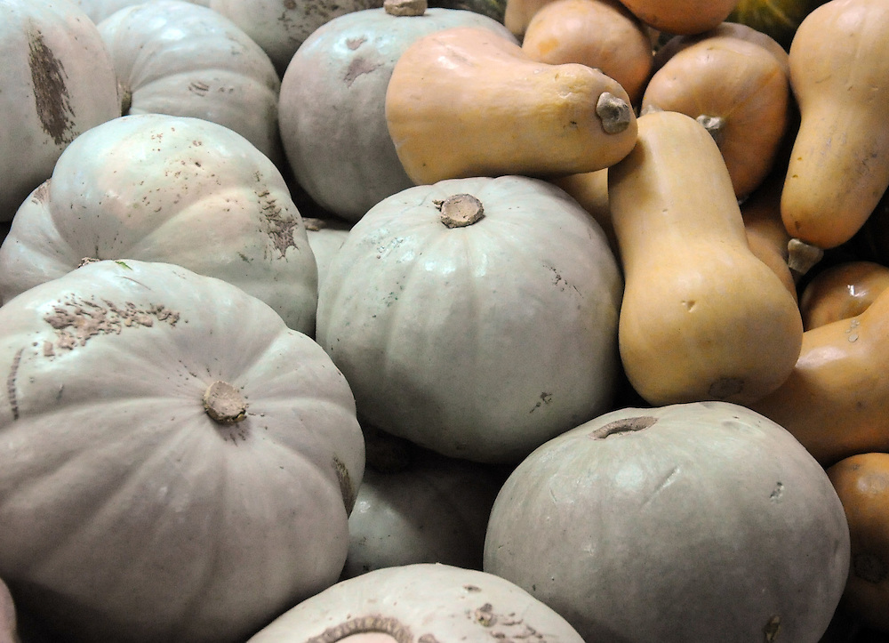 Pumpkins, vegetables, Dannevirke, New Zealand, Thursday, September 18, 2014. Credit:SNPA / Ross Setford