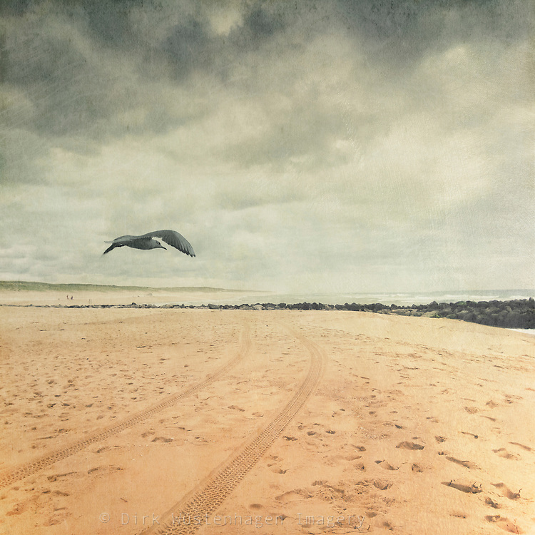 Beach of Contis-Plage, France with sea gull<br /> <br /> prints: http://www.artflakes.com/de/products/beach-patrol