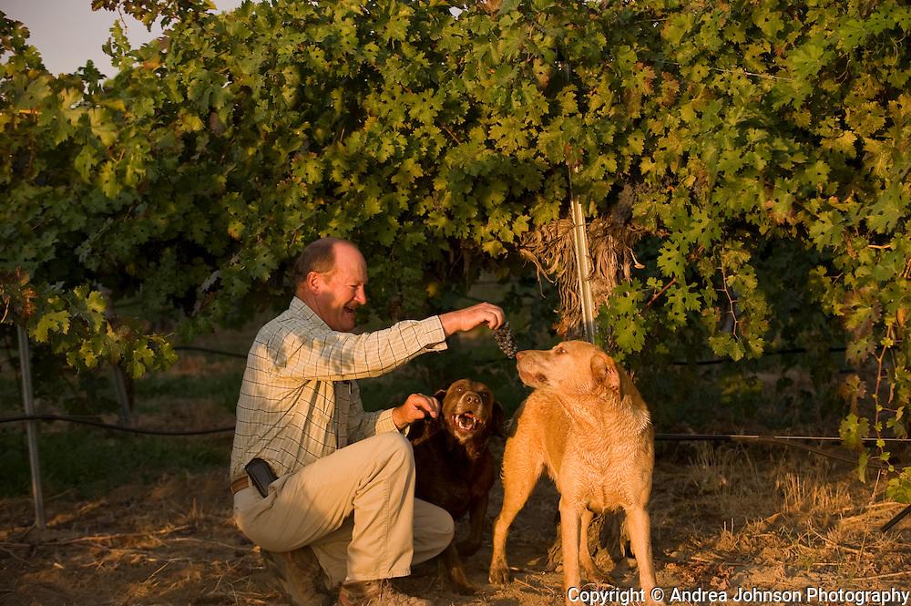 Dick Boushey at his Boushey Vineyards, Rattlesnake Hills AVA, Yakima Valley wine region, eastern Washington, USA