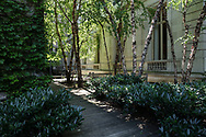 Birch trees in the garden at the French consulate on Fifth Avenue between 78th and 79th street.
