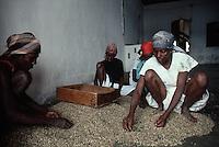 1985, Jacmel, Haiti --- Women Sorting Raw Coffee Beans --- Image by © Owen Franken/CORBIS