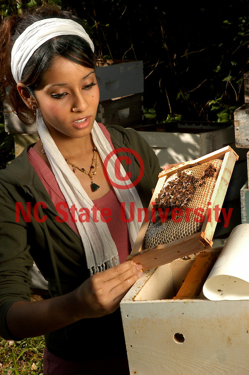 CALS' Nabila Rouf looks over beehives as a part of her research.    PHOTO BY ROGER WINSTEAD