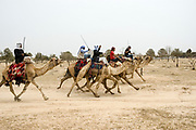 Beduin Camel racing in the desert. Photographed in The Negev Desert, Israel