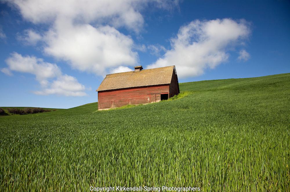 WA05502-00...WASHINGTON - Old barn in a grain field in the Palouse area.