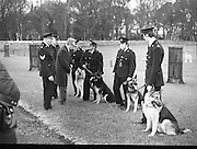 New Garda Dogs.   (N2)..1979..22.11.1979..11.22.1979..22nd November 1979..Today saw the passing out of four new Garda Dogs for the Garda Canine unit.The event was held at the Royal Hospital, Kilmainham..Image shows the four new Garda recruits with their handlers being introduced to the commissioner after they had completed all their training.