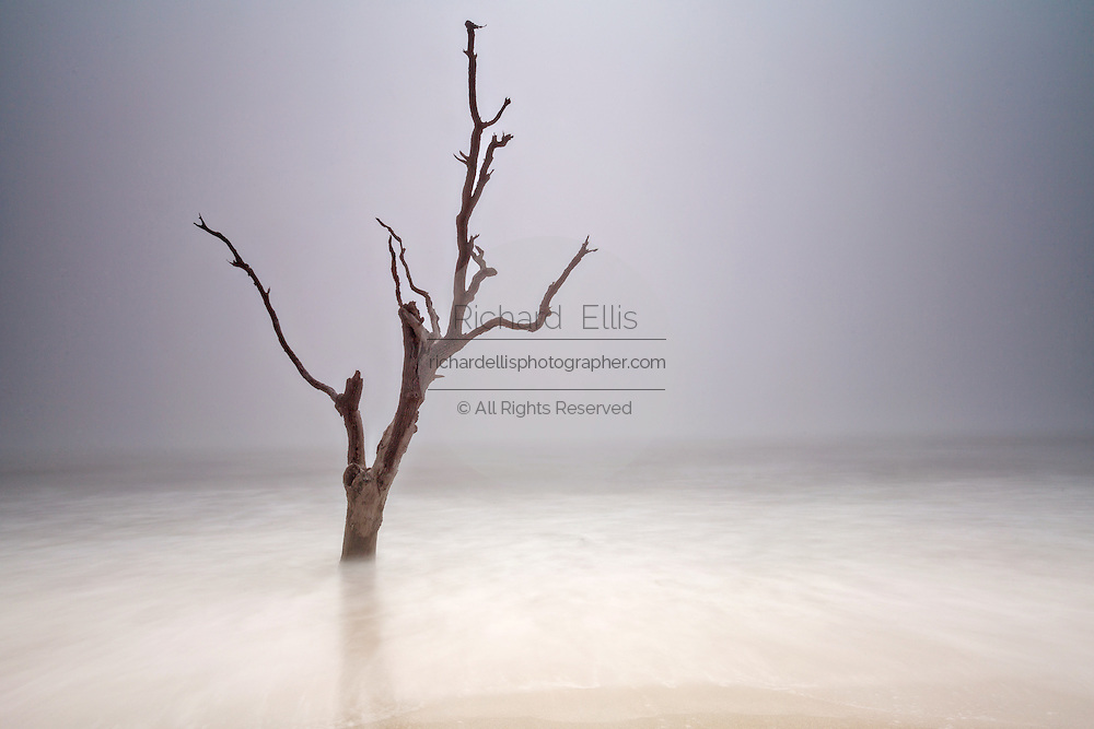 Fog on boneyard beach at Botany Bay in Edisto Island, South Carolina. Rising tides along the coastline are eroding the beach slowly submerging the forest.