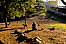 USA. New York -Brooklyn dog's park    Usa /  Brooklyn  parc de promenade pour les chiens.   USa