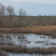 Wetlands of the Ipswich River, Topsfield, MA