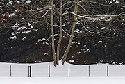Snow on Basalt Crater Wall, Mount Tabor Park. In 1903, John Charles Olmsted of the Massachusetts-based landscape design firm Olmsted Brothers recommended that a city park be developed at Mount Tabor.  Portland Parks Superintendent Emanuel T. Mische, who had worked at Olmsted Brothers, consulted with Olmsted on the park layout and integration of the reservoirs into the park design.  Photo 12/24/2008.
