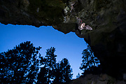 Bat (myotis sp) flying into a cave at dusk in Central Oregon. Note the red band on the wing. © Michael Durham