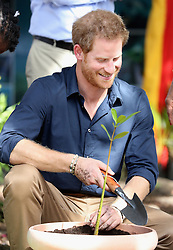 Prince Harry plants a Mangrove on Grand Anse Beach as he visits Mangrove restoration projects ahead of visiting the coral reef in Grenada during the second leg of his Caribbean tour.