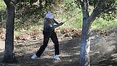 Chevron World Challenge: Tiger Woods