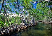 Mangrove channels