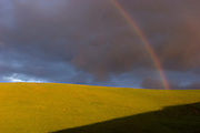 Rainbow on a winter afternoon over vineyards in the southern part of the Napa Valley, California.
