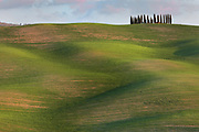 Cypress trees on a ridge above undulating fields, near San Quirico d'Orcia in Tuscany, Italy. The trees are next to the Cassia road between San Quirico d'Orcia and Montalcino. Picture by Manuel Cohen