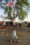 "Camp Hope, eine Zeltstadt fuer Obdachlose in Ontario, Kalifornien.Die umgekehrte amerikanische Flagge bedeutet ""Notlage"", das Schild besagt ""Camp Fegefeuer""..Fotos © Stefan Falke..Camp Hope, a  tent city for the homeless in Ontario, California.The upside down flag is hissed as a sign of distress, the sign reads ""camp purgatory"""