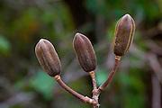 Sao Jose do Rio Preto_SP, Brasil...Programa Biota da Unesp, na foto detalhe de uma planta...The Biota program of Unesp, in this photo a plant...Foto: JOAO MARCOS ROSA / NITRO