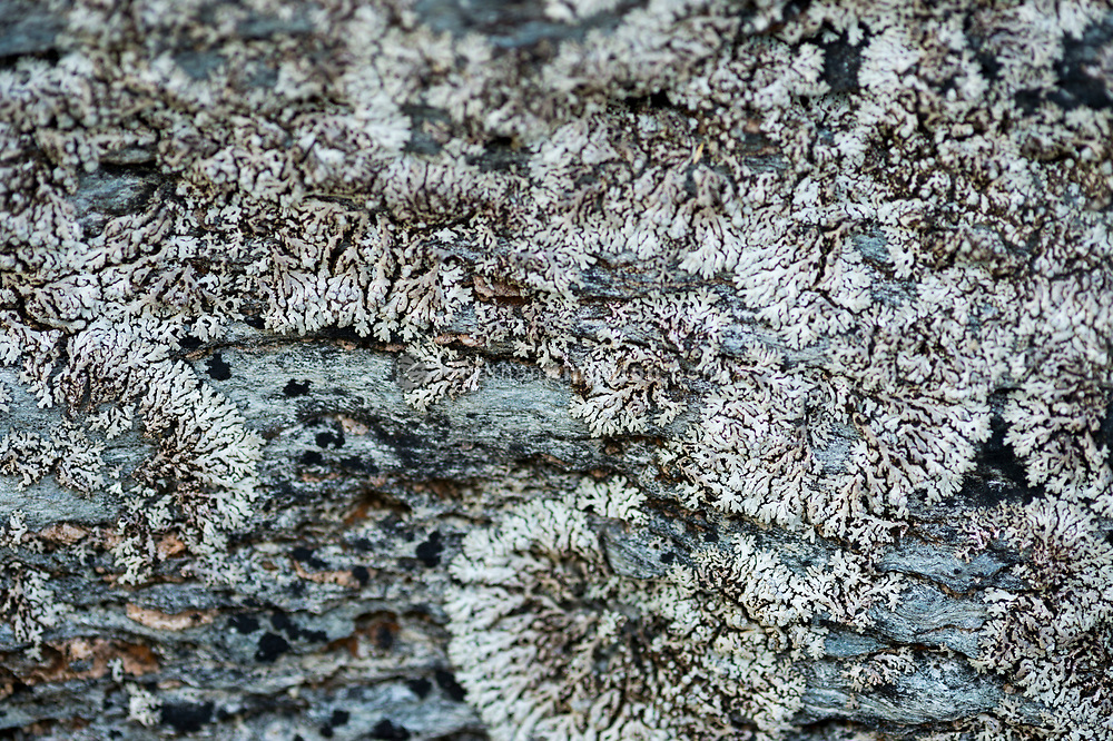 Lichen growing on a rock in southeast Alaska.