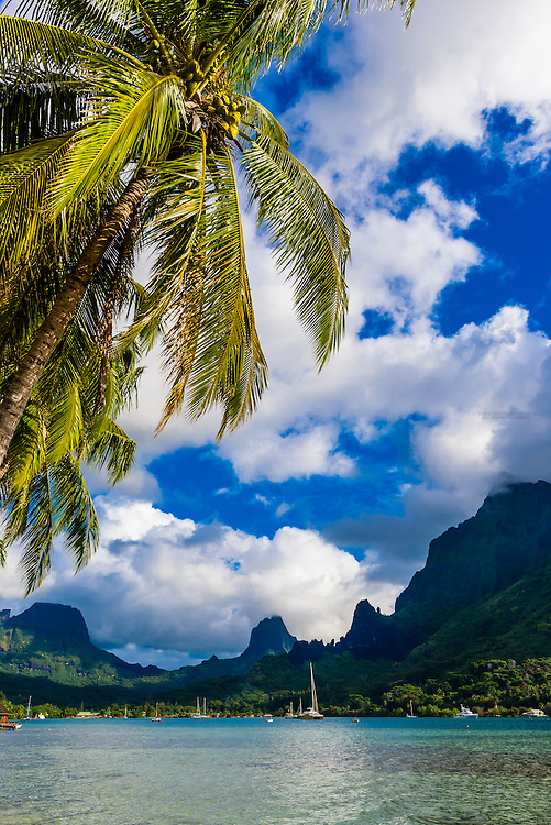 Cook's Bay, island of Moorea, French Polynesia.