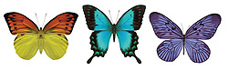 Three butterflies on white background with clipping paths