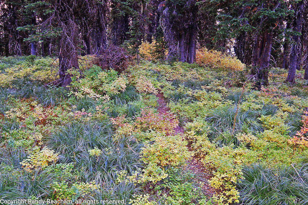 Buckhorn Baldy trail and forest in early fall. Purcell Mountains, Montana