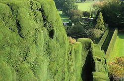 The yew hedge