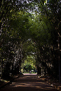 Sao Paulo_SP, Brasil...Arvores do Parque do Ibirapuera em Sao Paulo...The trees in Ibirapuera Park in Sao Paulo...Foto: MARCUS DESIMONI / NITRO