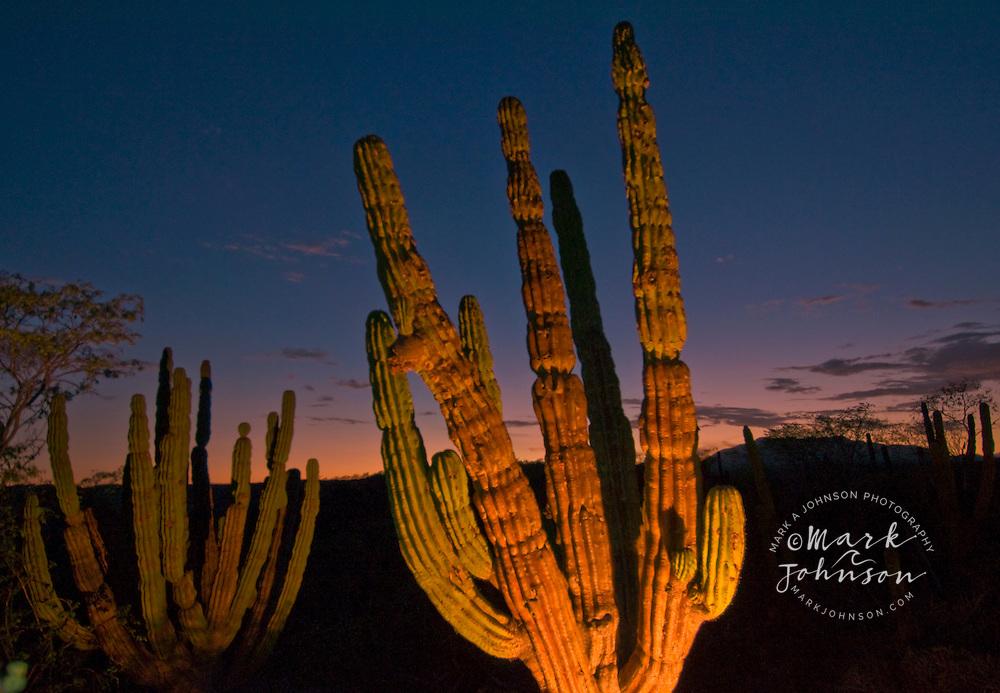 Desert scene near Cabo San Lucas, Baja California Sur, Mexico