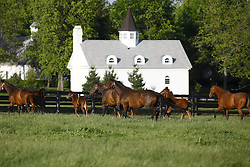 Mares and foals frolicking in a paddock off N. Yarnalton Road in Fayette County, Monday, April 23, 2012 on N. Yarnallton in Lexington.