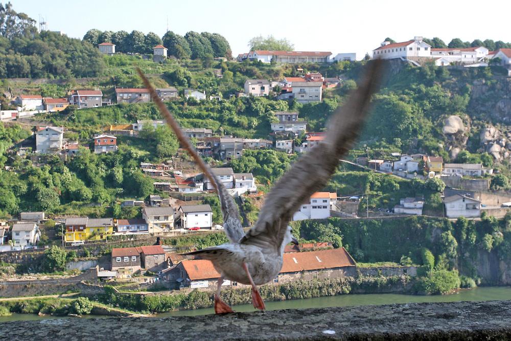 Una gaviota a punto de echar el vuelo a orillas del río Duero en la ciudad de Oporto (Portugal)