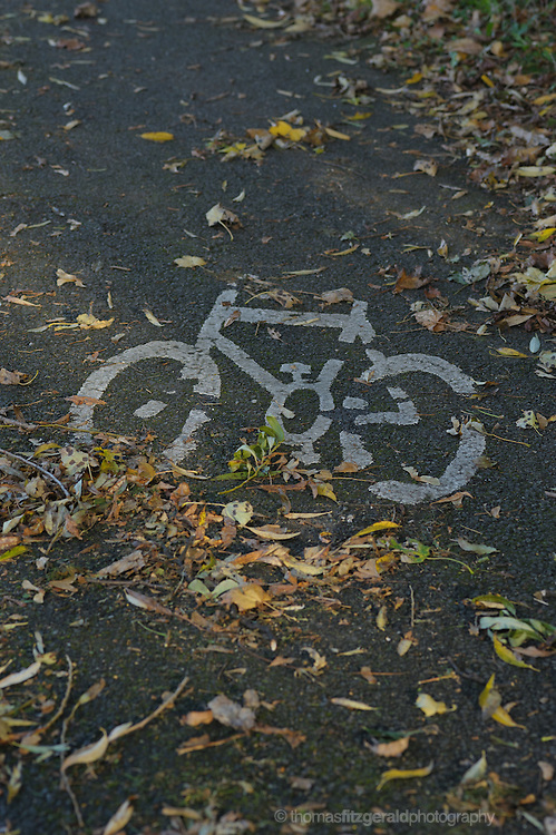 Image of a bycycle logo, part of a dublin bike lane, covered in fallen autumn leaves