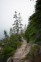 Rugged trail leading to the Atlantic Ocean, coastal Mount Desert Island, Maine, USA.