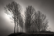 A tree alley at the bank of the Po River nearby Carignano in Piedmont, italy, immersed in thick fog. Taken a few minutes after sunrise on a morning of mid March.