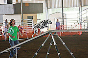 Dogs competing in agility trials.