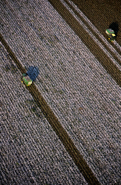 Stock photo of an aerial view of large fields of cotton being harvested