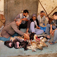 Men Socialize While Feeding Poultry in Fes el Bali at Fez, Morocco <br /> The wall around Fes el Bali has sealed in Morocco&rsquo;s medieval history. Each neighborhood hosts a different craft or type of merchant (guild). Examples include blacksmiths, potters, weavers, butchers and leather tanneries. Few of the vendors use modern equipment. Instead, they follow traditional practices handed down through the generations. It is typical to see men like these socializing while another works. At first glance, you will be amazed how these poultry form a perfect circle while being feed, as if they were domesticated. Then you will notice their legs are bound.