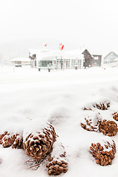 """""""Snowy Pinecones in Truckee"""" - Photograph of snow covered pine cones in historic Downtown Truckee, California."""