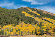 Fall color in the Castle Creek Valley near Aspen, Colorado.