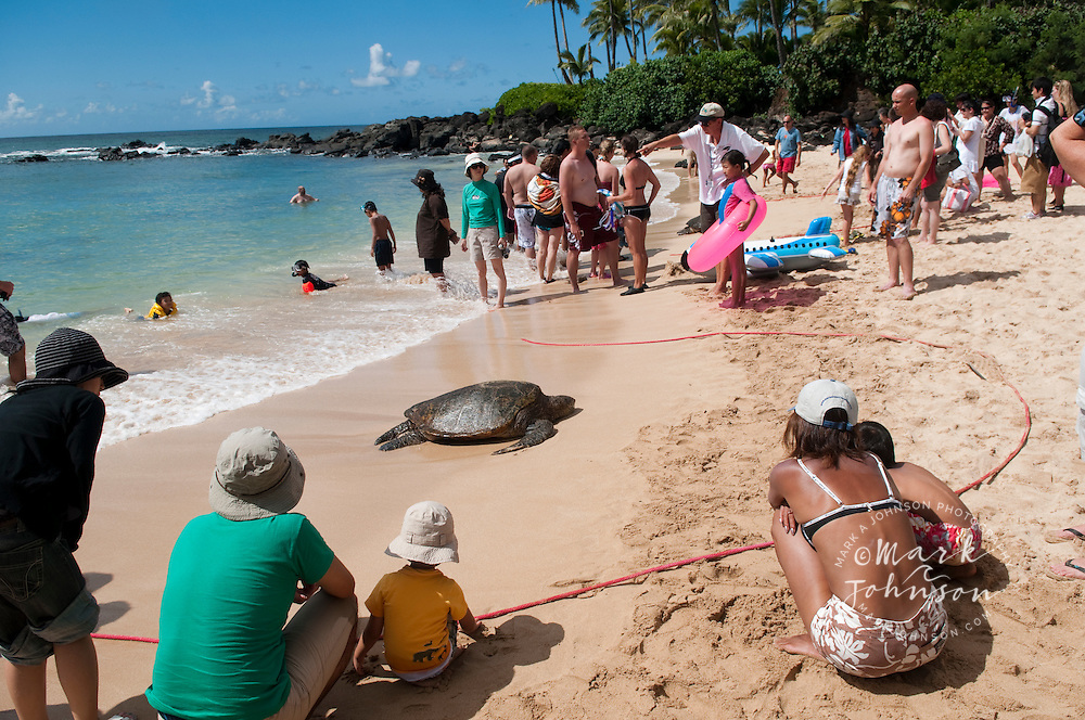 Tourists gathering around beached green sea turtle, North Shore, Oahu, Hawaii