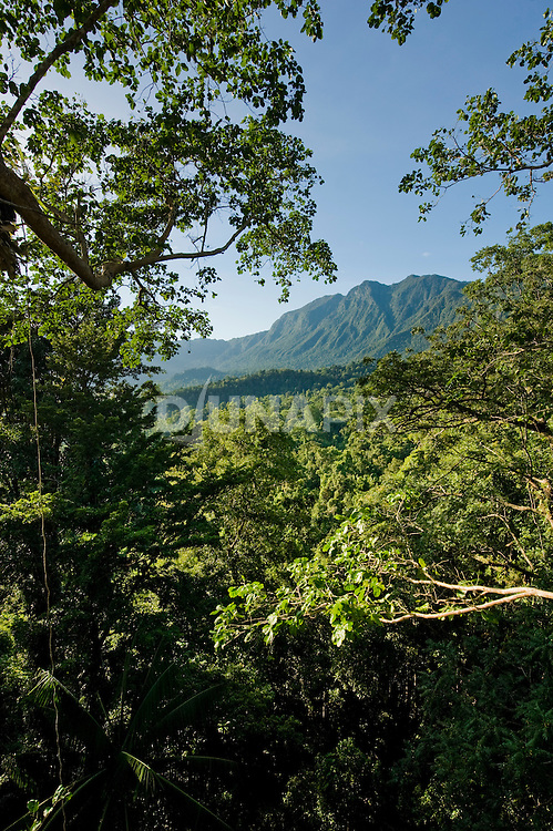 Mountain view from the Morite canopy platform.
