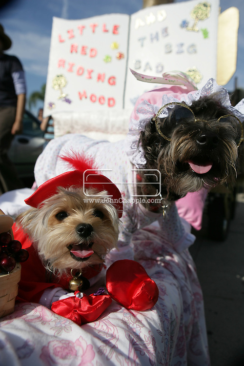 26th October 2007.Long Beach, California. Long Beach has been named one of the Top 9 Dog-Friendly Cities in the USA by Dog Fancy Magazine. You can see why at the annual 'Haute Dog Howl'oween Parade'. The world's largest canine-themed Halloween event, saw hundreds of dogs in outrageous outfits. Americans spend an astonishing $41 billion a year on their furry friends. Pictured is Coco and Black Jack as Little Red Riding Hood and the Big Bad Wolf. © JOHN CHAPPLE / REBEL IMAGES Tel: 310 570 9100.